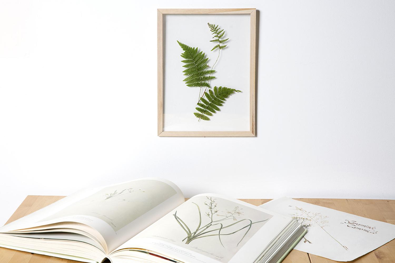 L Herbier Du Midi Produits Naturels cadre herbier format a4 - cadres photos - 10 doigts