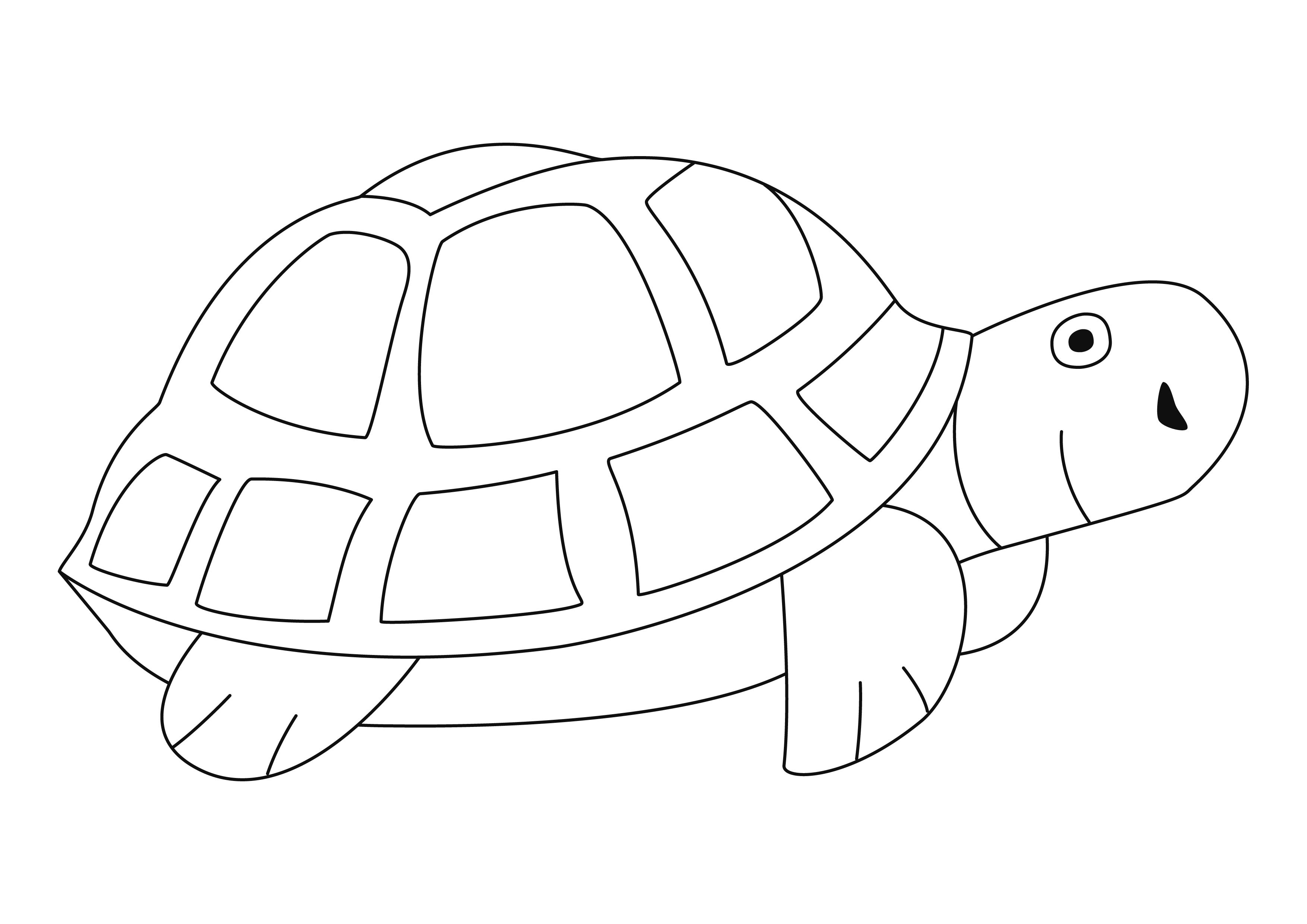 Coloriage - Animaux : Tortue 04 - 10 Doigts