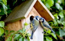J'observe les oiseaux - Montessori - 10doigts.fr