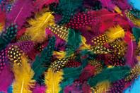 Plumes de faisan, couleurs vives assorties - 250 pièces - Plumes - 10doigts.fr