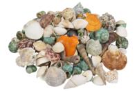 Sachet de 500 g de coquillages naturels  - Vive l'été ! - 10doigts.fr