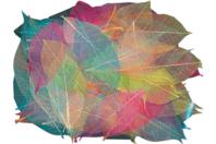 Squelettes de feuilles en couleurs - 120 pièces - Fleurs et feuilles - 10doigts.fr