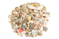 Perles coquillages - Set d'environ 150 coquillages - Perles en matières naturelles - 10doigts.fr