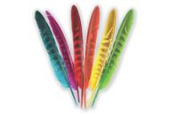 Plumes 6 couleurs - 24 pcs - Plumes - 10doigts.fr
