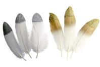 Plumes à bout pailleté - couleur au choix - Plumes - 10doigts.fr