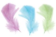 Plumes, couleurs pastels assorties - 50 pièces - Plumes - 10doigts.fr