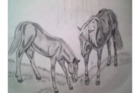 Chevaux - Dessin - 10doigts.fr