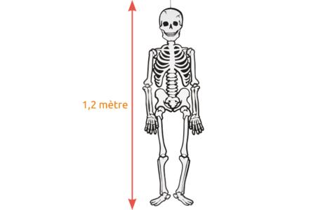 Squelette géant fluorescent la nuit et articulé - Halloween – 10doigts.fr
