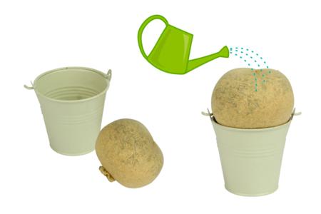 Têtes à gazon + seaux en métal - Lot de 4 - Graines à planter – 10doigts.fr