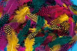 Plumes de faisan, couleurs vives assorties - 250 pièces - Plumes – 10doigts.fr