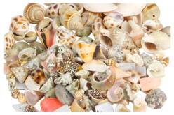 Perles coquillages - Set de 150 - Perles en matières naturelles – 10doigts.fr