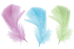 Plumes, couleurs pastels assorties - 50 pièces - Plumes – 10doigts.fr