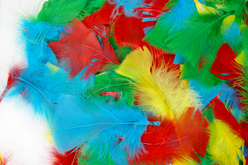 plumes multicolores