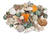 Coquillages naturels - Sachet de 500 gr - Galets et coquillages - 10doigts.fr
