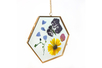 Cadre en verre hexagonal Herbier - Supports en Verre – 10doigts.fr