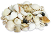 Coquillages - assortiment de 500 gr - Galets et coquillages - 10doigts.fr