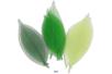 Set de 20 feuilles de 6 cm, en camaïeu vert - Fleurs et feuilles 13403 - 10doigts.fr