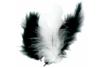 Plumes noires et blanches - Environ 50 pces - Plumes 10447 - 10doigts.fr